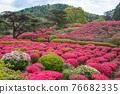 komuroyama, azalea, azaleas 76682335