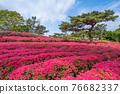 komuroyama, azalea, azaleas 76682337