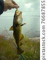 cod on fishing-rod on background of sea 76687855