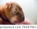 baby squirrel wild child 76687861