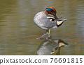 水鴨 鳥兒 鳥 76691815