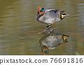 水鴨 鳥兒 鳥 76691816