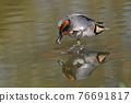 水鴨 鳥兒 鳥 76691817