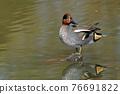 水鴨 鳥兒 鳥 76691822