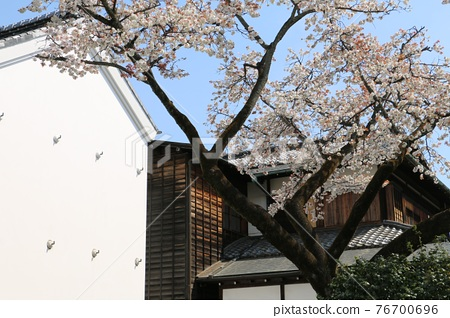 Mitsui family and Sakura 76700696