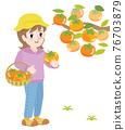 日本柿 甜柿 柿子 76703879