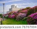 杜鵑花 花朵 花 76707004