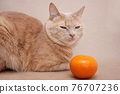 A red cat and one tangerine next to it. Pet food concept. Cat diet. Allergens at home. 76707236