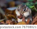 도토리를 먹는 다람쥐 76708021