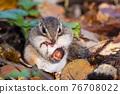 도토리를 먹는 다람쥐 76708022