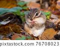 도토리를 먹는 다람쥐 76708023
