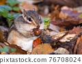 도토리를 먹는 다람쥐 76708024