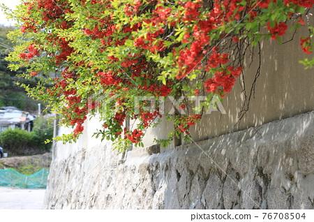 정릉골.나뭇잎.새싹.골목길.주택 76708504
