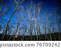 森林 樹林 星空 76709242