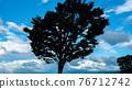 一棵樹 76712742