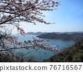 cherry blossom, spring, ocean 76716567