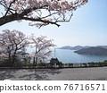cherry blossom, spring, ocean 76716571
