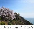 cherry blossom, spring, ocean 76716574