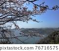 cherry blossom, spring, ocean 76716575