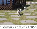 뛰어노는 강아지들 76717855