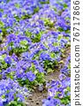 花園 花床 花朵 76717866