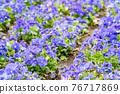 花園 花床 花朵 76717869