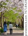 cherry blossom, cherry tree, park 76718429