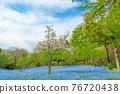 林草屬植物(一種園藝觀賞植物) 公園 花園 76720438