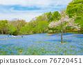 林草屬植物(一種園藝觀賞植物) 花園 花朵 76720451