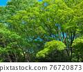 spring, tender green, verdure 76720873