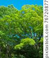 spring, tender green, verdure 76720877