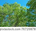spring, tender green, verdure 76720878