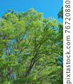 spring, tender green, verdure 76720880
