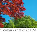 spring, spring leaf colors, red 76721151