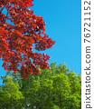 spring, spring leaf colors, red 76721152