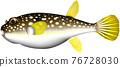 河豚 河豚魚 魚 76728030