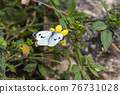butterfly. white butterfly on yellow flower 76731028