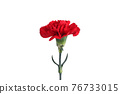 花 康乃馨 紅 76733015