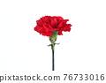 花 康乃馨 紅 76733016