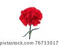 花 康乃馨 紅 76733017