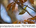 鳥的白眼睛,綠色的身體,戴著白眼鏡,被誤認為是鶯 76749585