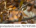 鳥的白眼睛,綠色的身體,戴著白眼鏡,被誤認為是鶯 76749586
