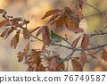 鳥的白眼睛,綠色的身體,戴著白眼鏡,被誤認為是鶯 76749587