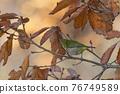 鳥的白眼睛,綠色的身體,戴著白眼鏡,被誤認為是鶯 76749589