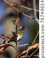 鳥的白眼睛,綠色的身體,戴著白眼鏡,被誤認為是鶯 76749654