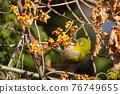 鳥的白眼睛,綠色的身體,戴著白眼鏡,被誤認為是鶯 76749655