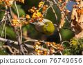 鳥的白眼睛,綠色的身體,戴著白眼鏡,被誤認為是鶯 76749656