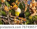 鳥的白眼睛,綠色的身體,戴著白眼鏡,被誤認為是鶯 76749657