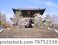 temple gate, cherry blossom, cherry tree 76752336