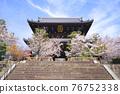 temple gate, cherry blossom, cherry tree 76752338